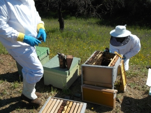 Participantes en anterior curso, fotografiando las abejas en el colmenar. Se observan colmenas perfección, dadant y layens.