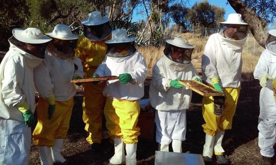 Resultado de imagen de extraccion de miel bee garden