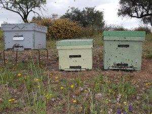 Colmena perfección, dadant y layens. www.beegardenmalaga.com