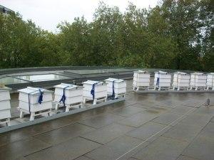 Colmenas en azotea de Hotel Lancaster London