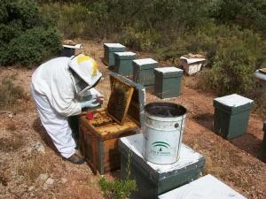 Muestreo de abejas y zanzanos