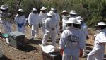 Parte Práctica curso apicultura Bee Garden