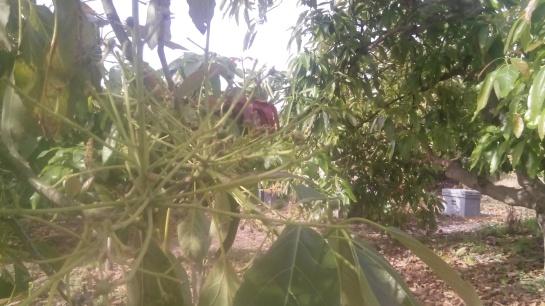 bee garden aguacate1
